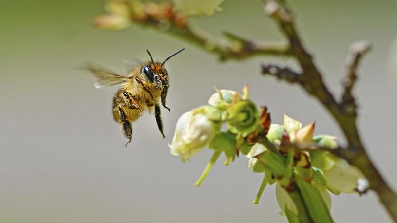 apicoltura-03-euroconsulting