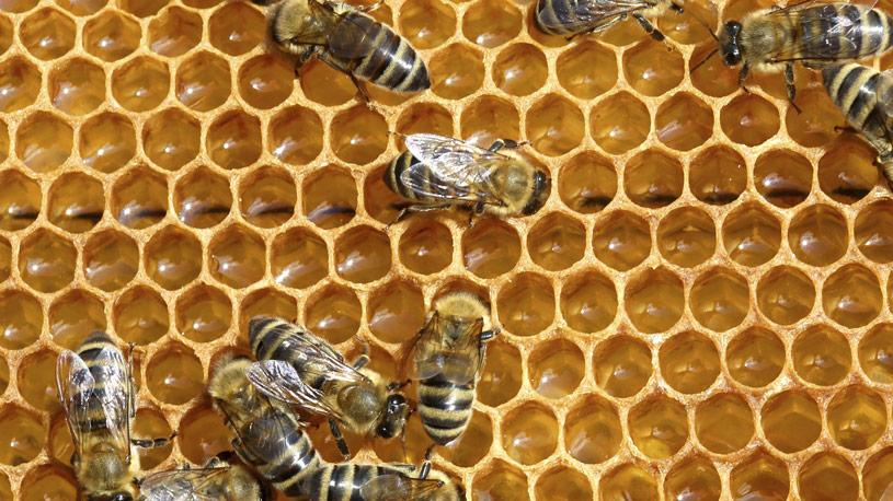 apicoltura-04-euroconsulting