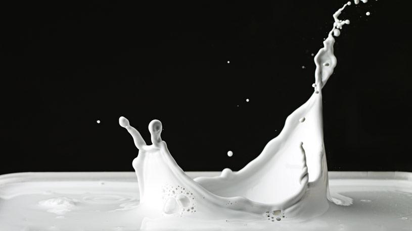 latte-derivati-03-euroconsuling