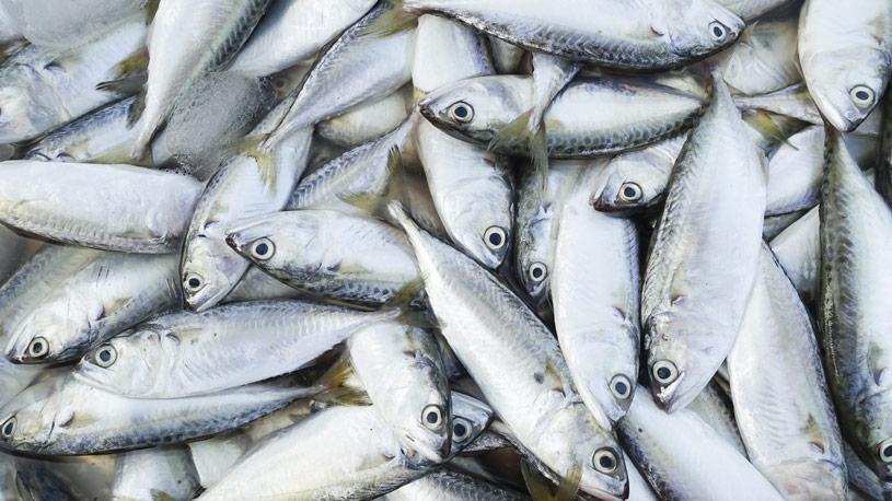 pesca06-euroconsulting