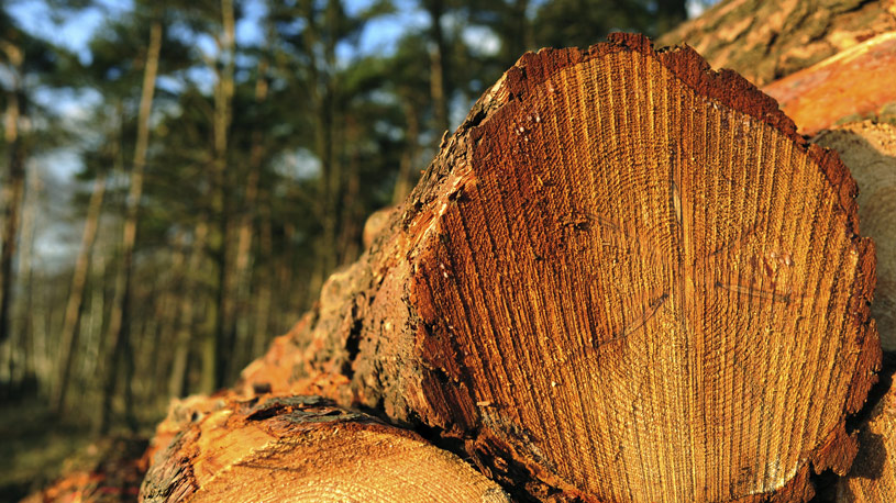produzione-legname-euroconsulting