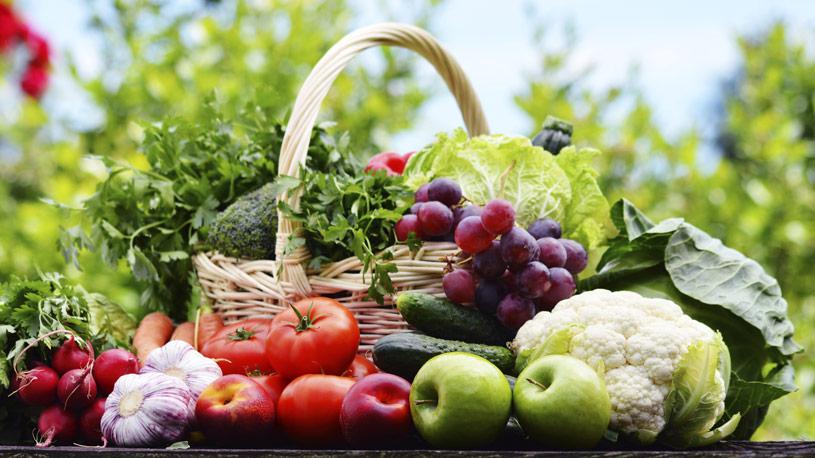 produzione-vegetale-11-euroconsulting