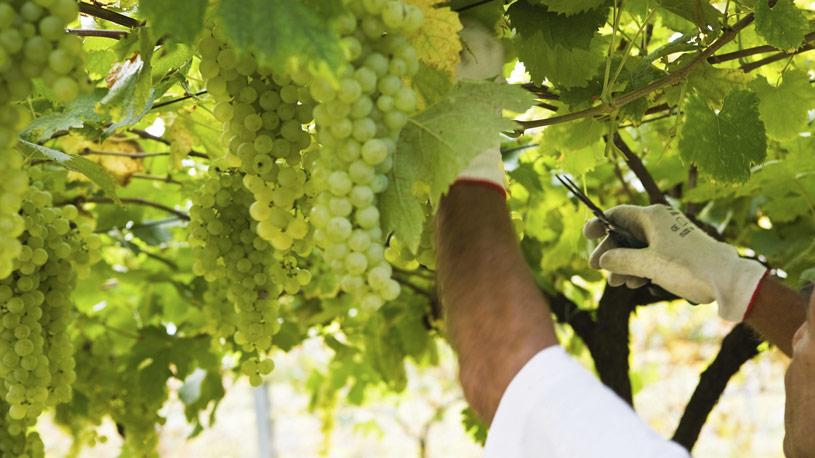 viticoltura-produzione-vegetale-14-euroconsulting