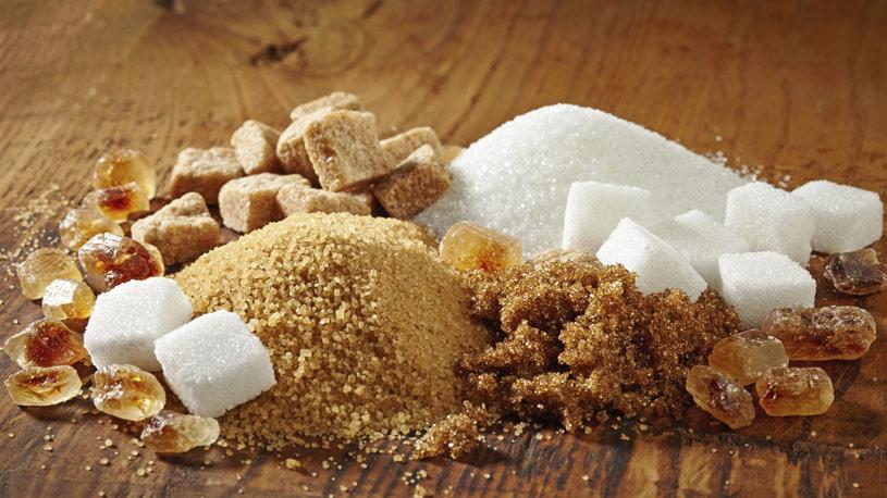 zucchero-produzione-vegetale-07-euroconsulting