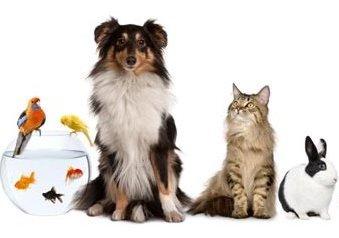 Intensificare La Lotta Contro Il Traffico Di Animali Da Compagnia