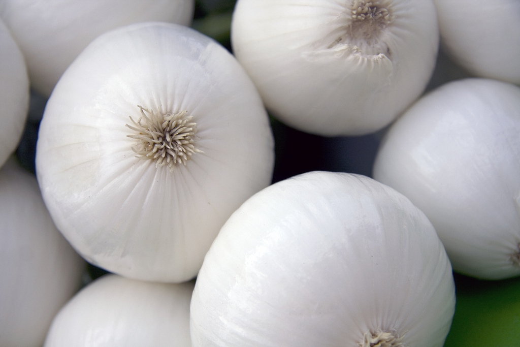 cipolla-bianca di Margherita