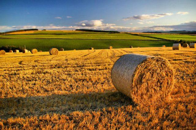 agricoltura-640x425